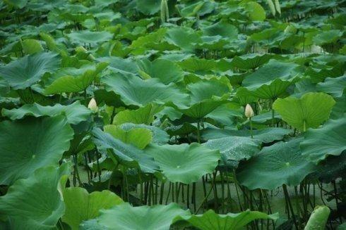 恩施专业宜春种植养殖招商加盟