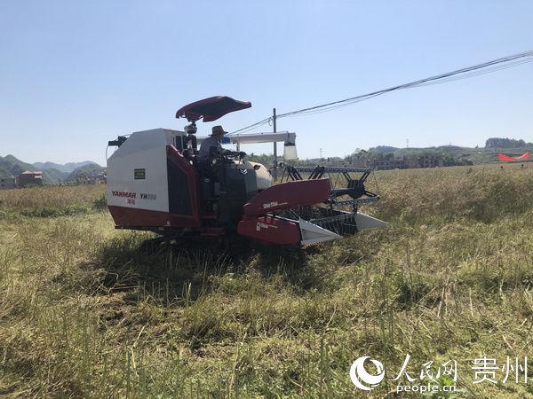 天水贵州米业