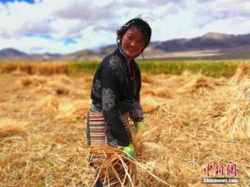 泰安哪里有青藏土特产怎么加盟